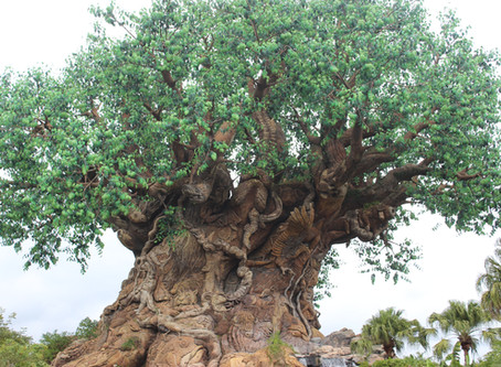 What You Need to Know for a Great Day at Animal Kingdom