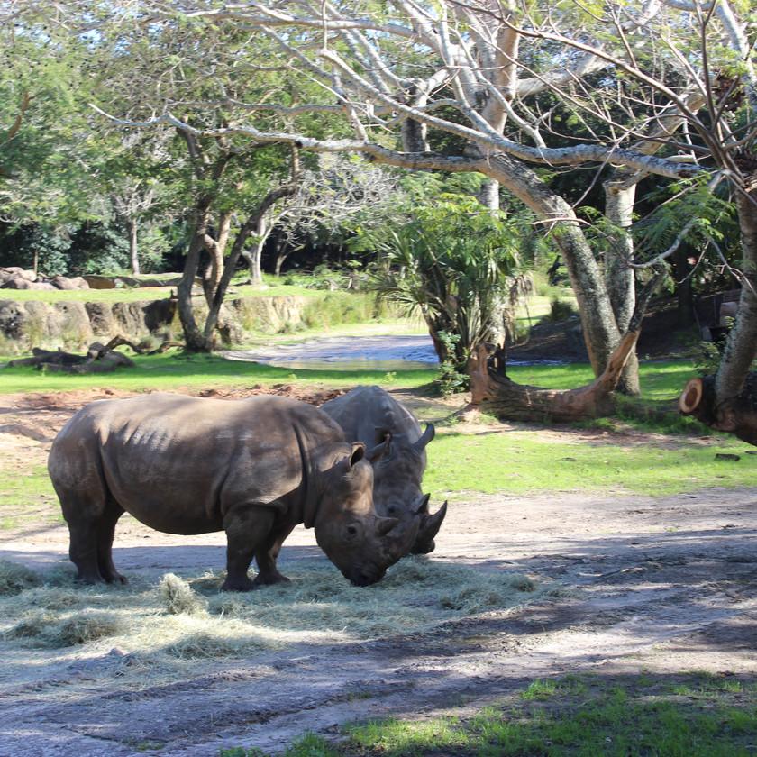 Kilimanjaro Safaris by Destination Families