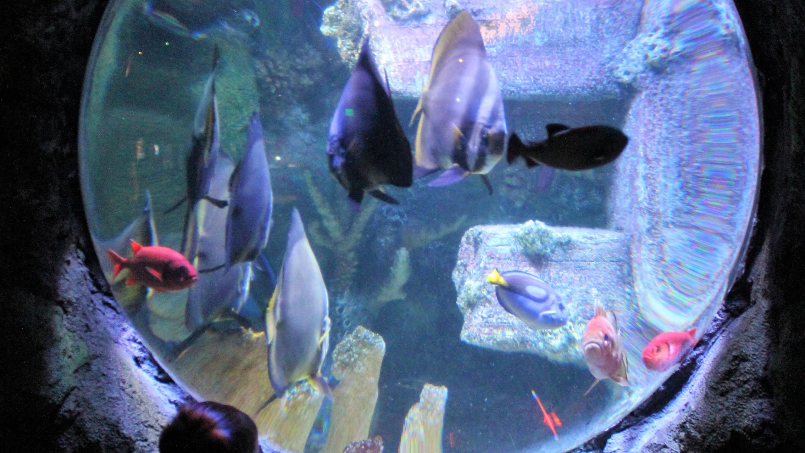 Sea Life Aquarium at LEGOLAND Discovery Center in Kansas City