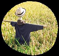 水田の品質管理のイメージ画像