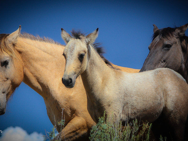 Monero Mustangs Wild Horses