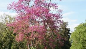 Découverte et classement d'un arbre remarquable