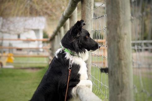 Watching Sheep