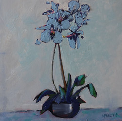Lesley's Orchid  LEXMUTT108