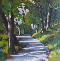 Sunlight through the Trees  LEXMUTT106
