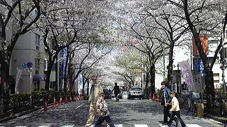 桜丘.JPG