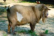 Bambi side.jpg