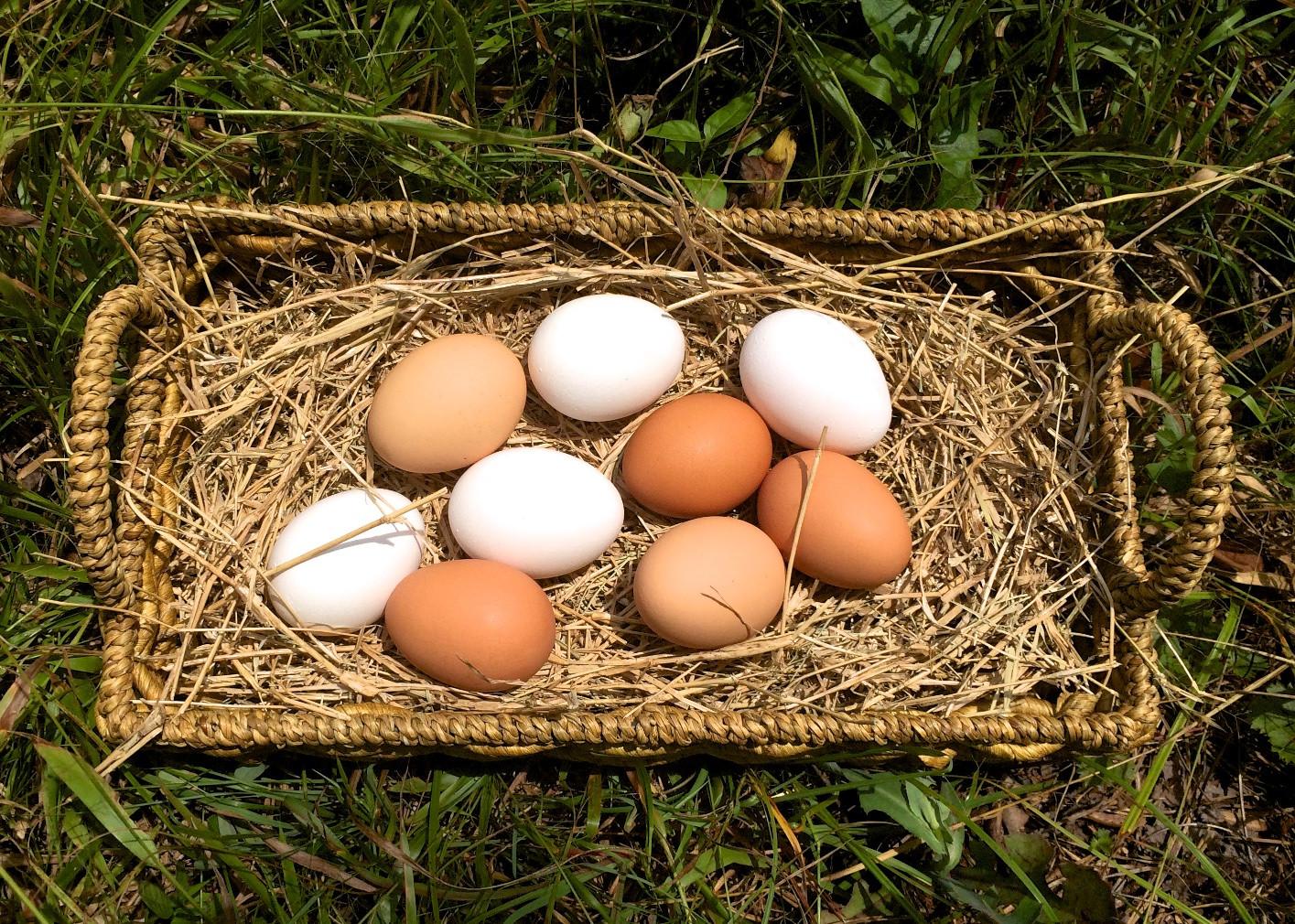 Eggsbasket.jpg