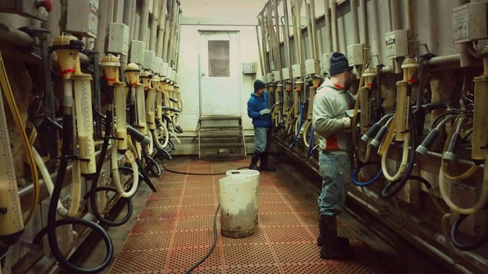 3d milking