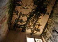 Techo y ventana en escalera interior (acceso segunda planta) Fotografia utilizada en una de las obras