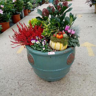 Winter planted pot
