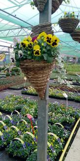 Winter Wall Hanging Basket