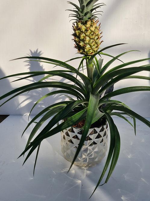 Pineapple in ceramic