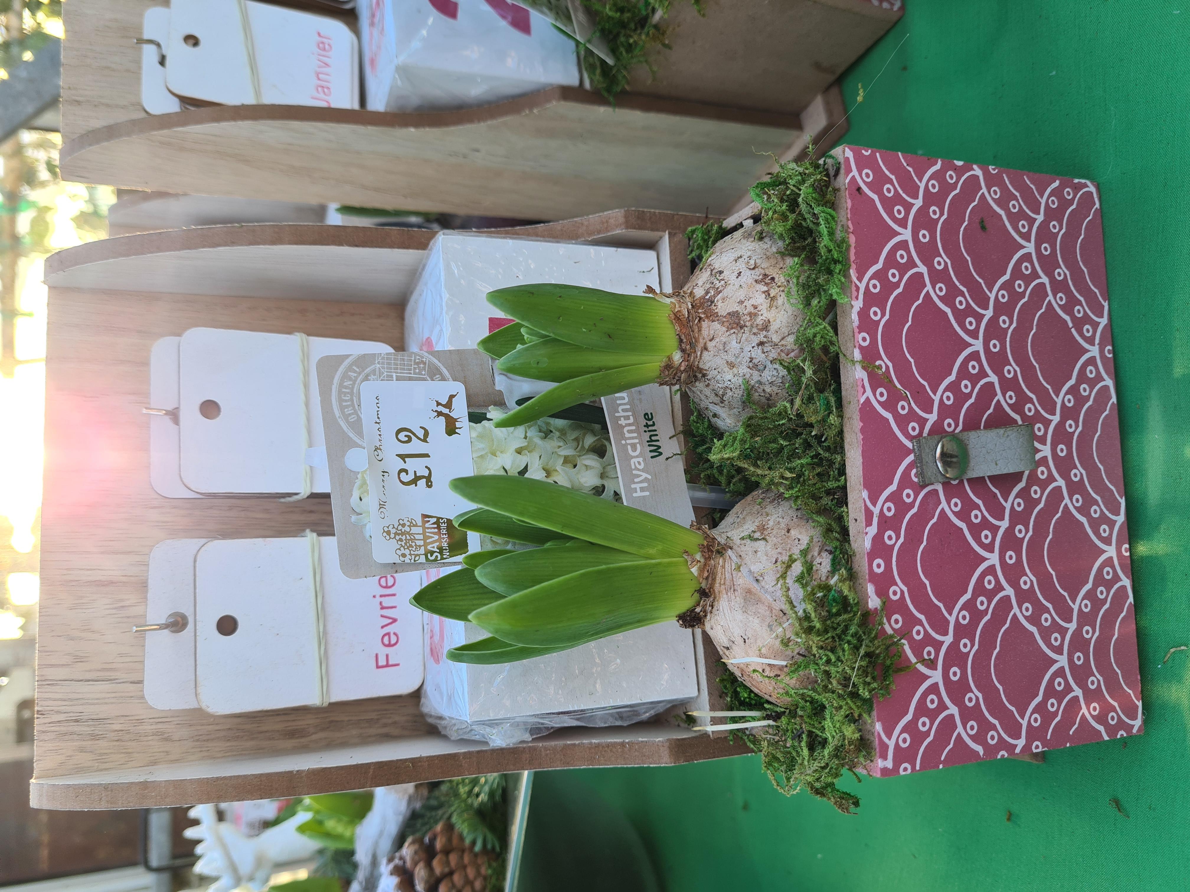 Hyacinth Calendar
