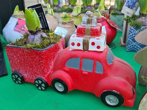 Red car Hyacinth