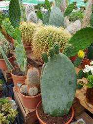 Cacti Selection