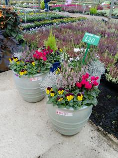 Winter pots