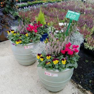 Winter planted Pots