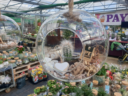 Hanging glass Cactus £10