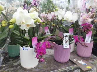 GIft Orchids