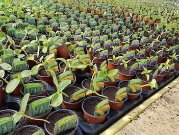 Small veg plants