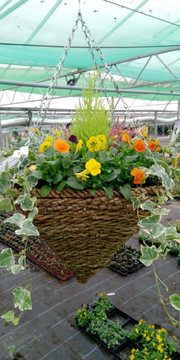 Winter Hanging Basket