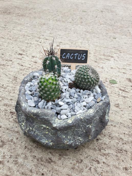 Cacti garden £8.50