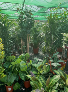House plant selection