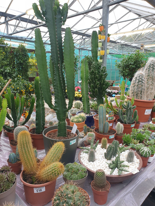 Cacti from £1.00