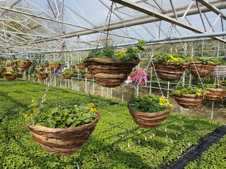 Round Bottom baskets