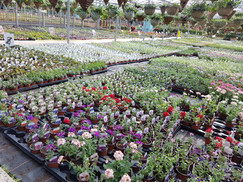 Basket plants