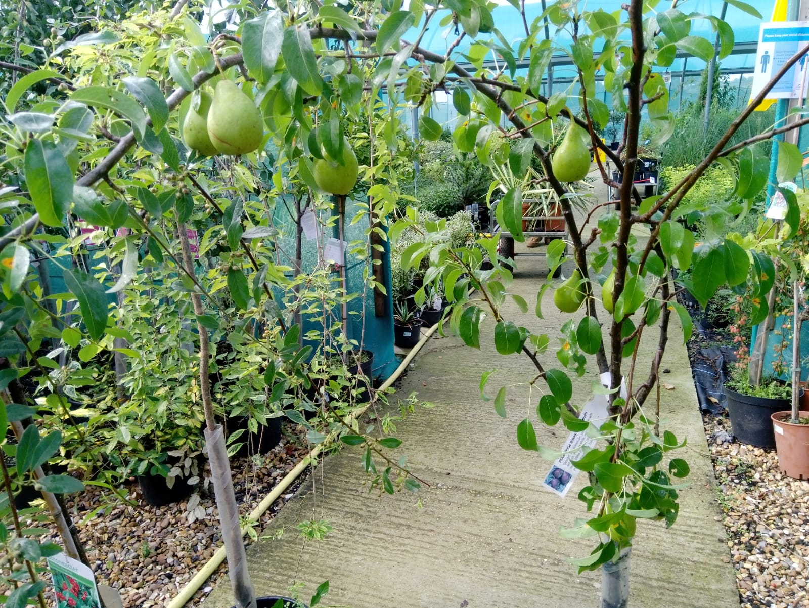 Fruit trees £17.95