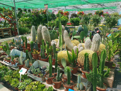 A Few Cacti from £1.00