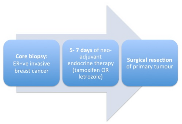 Breast cancer clinical trial process diagram