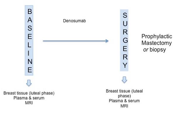 BRCA-D clinical trial diagram