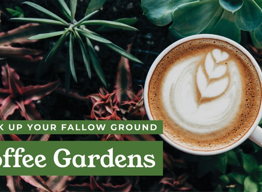 Breaking Up Your Fallow Ground: Coffee Gardens