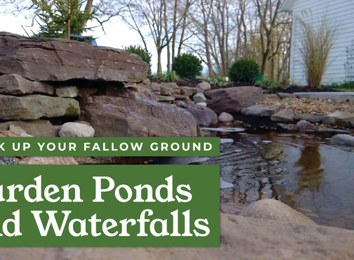 Break Up Your Fallow Ground: Garden Ponds and Waterfalls