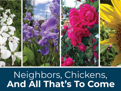 Neighbors, Chickens, And All That's To Come