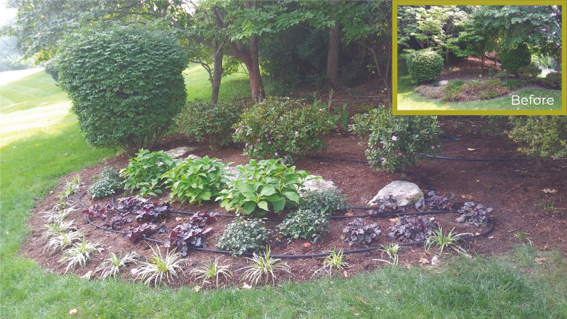 Shady Planted Bed Landscaping