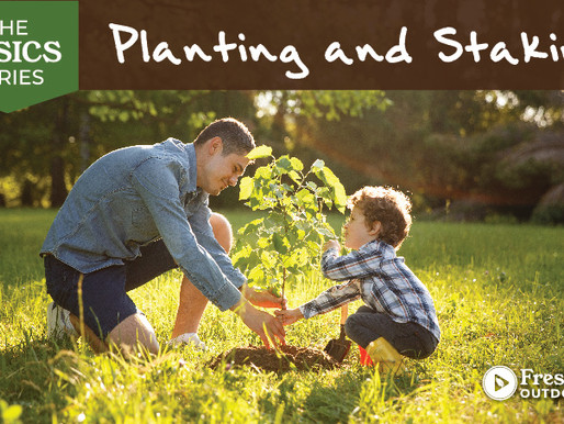 The Basics Series: Planting and Staking