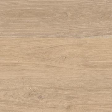 Sahara Oak.JPG