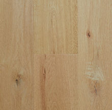 Begonia Oak_RW07108 porm.jpg