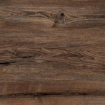 Indian Oak.JPG