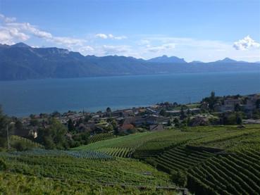 Lavaux, os vinhedos tombados pela UNESCO