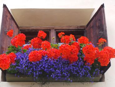 Flores na Europa