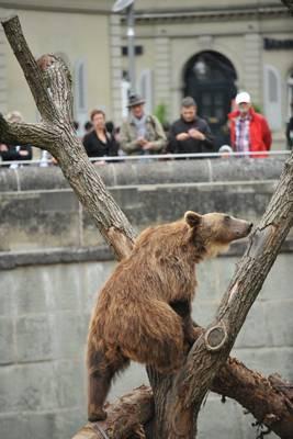 fonte: www.barenparc.ch