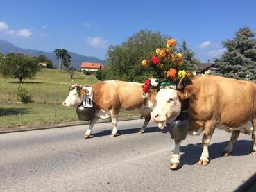 Désalpe, a festa de montanha mais tradicional da Suíça