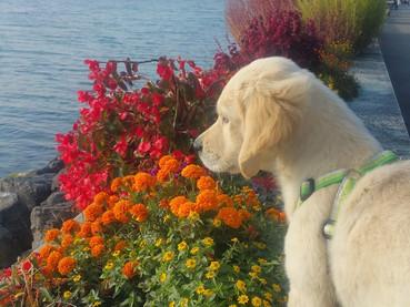 Socialização de cachorro