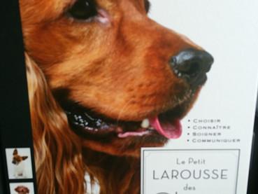 Cachorro na Suíça – Parte 1: Escolher, analisar, aprender