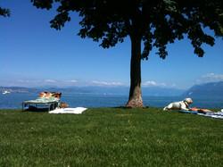 Verão no lago